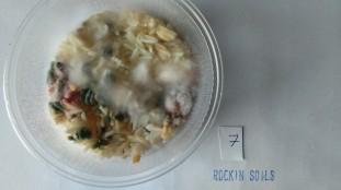 assessing fungi diversity
