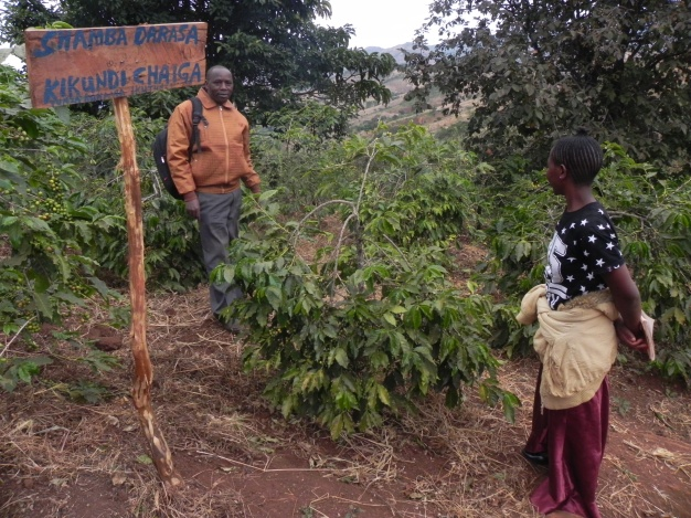 Visit to the trial plot where farmers try Bocashi and biofertiliser